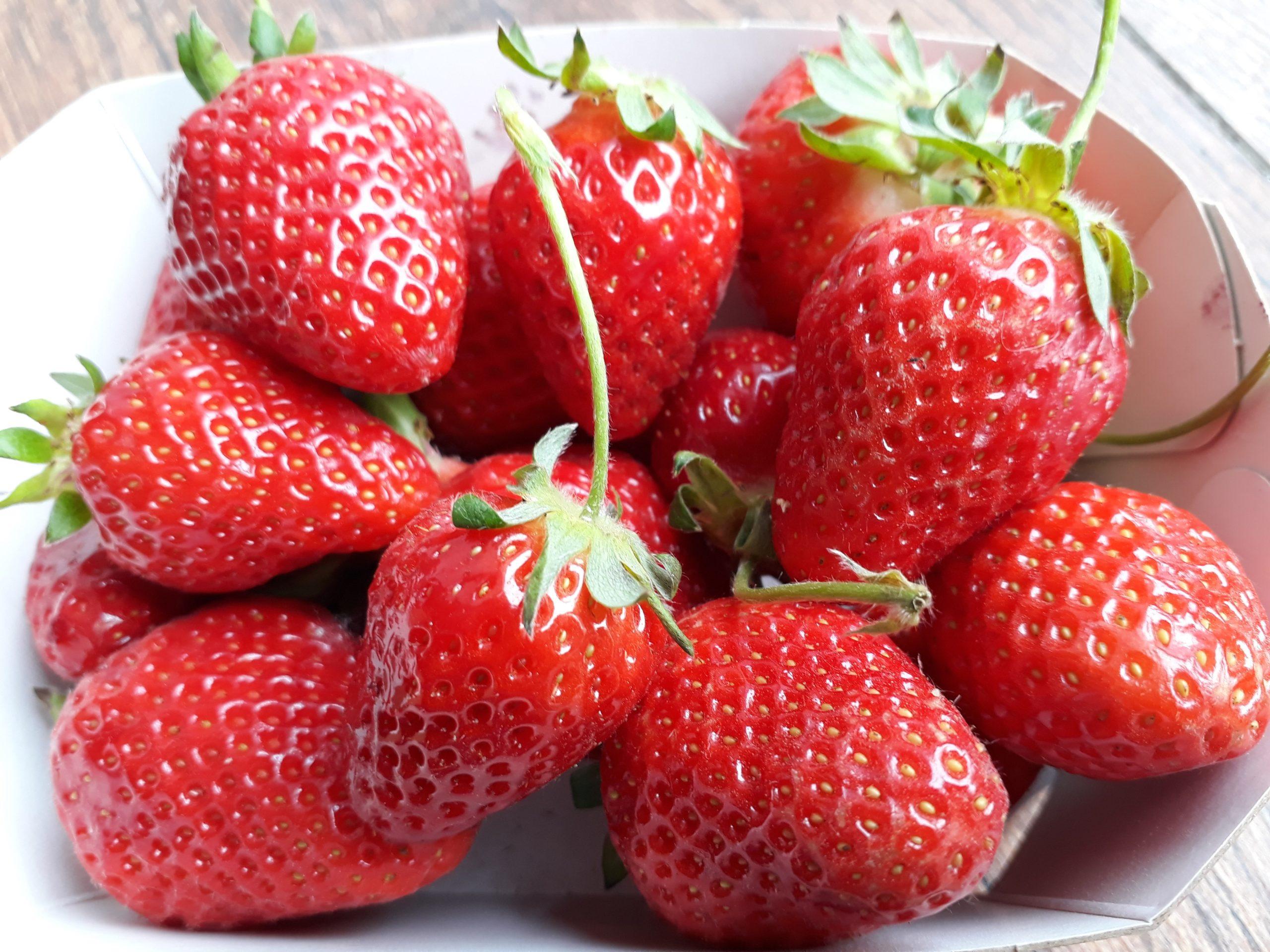 fraises Fruiterre