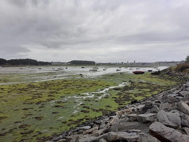 Stop aux marées Vertes
